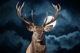 male red Deer portrait looking at you on full moon black background