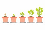 plant growing stages