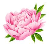 Peony flowers. Tender pink flowers. Wedding design. Watercolor illustration