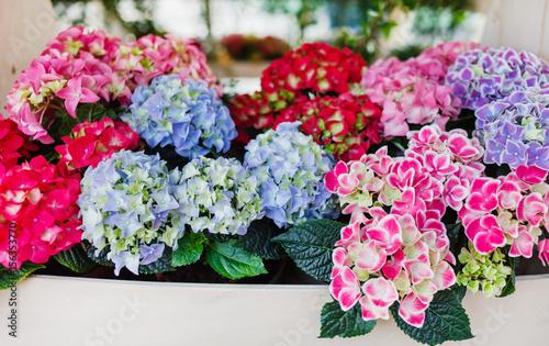 Foto Spatwand Hydrangea hydrangea flowers
