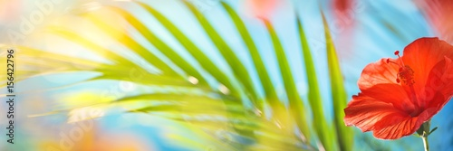tropical natural background