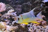 Poisson coloré des fonds marins en aquarium