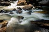 River stream in Endau Rompin National Park, Malaysia