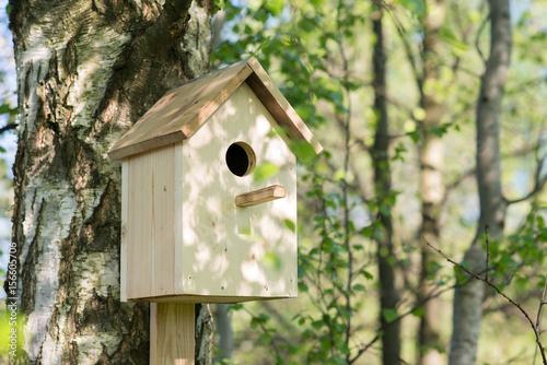 Birdhouse on a birch tree, hand made