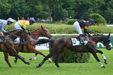cheval de courses - 156614523
