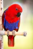 red parrot bird