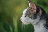 Cat. Cute cat outdoor.