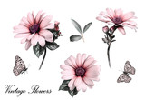 Set elements of flowers. Collection garden  branches, illustration isolated on white background, bud. Watercolor butterfly. Vintage