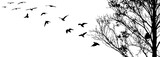 Flying birds and branch silhouettes on white background
