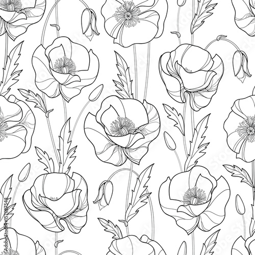 Vector seamless pattern with outline Poppy flower, bud and leaves in black on the white background. Monochrome floral pattern with ornate poppies in contour style for summer design or coloring book.
