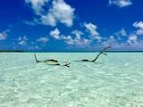 Dead tree sticking out of the turquoise lagoon of Marlon Brando's atoll Tetiaroa, Tahiti, French Polynesia