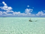 Dead tree sticking out of the turquoise lagoon of Marlon Brando's atoll Tetiaroa, Tahiti, French Polynesia