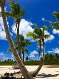 Palm trees on the white sanded beaches in the turquoise lagoon of Marlon Brando's atoll Tetiaroa, Tahiti, French Polynesia