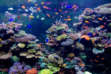 SEA Aquarium Reef Tank