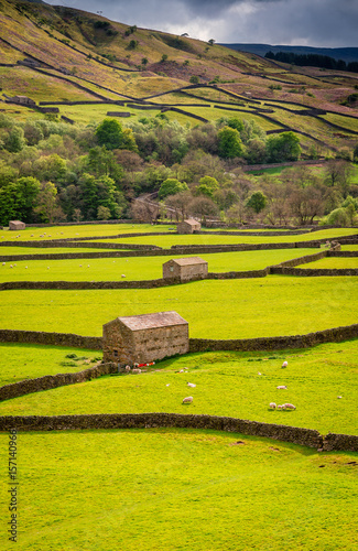 fototapeta na ścianę Gunnerside Field Barns / Swaledale in Yorkshire Dales National Park winds into the northern Pennines. It is famous for its meadows, field barns and drystone walls.