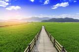 Vast green meadow.