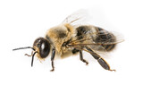 bee drone - 157160952
