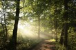 Deciduous forest on a foggy spring morning
