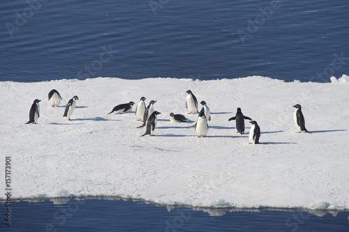 Plakát Pingüinos Adélia en la Antartida