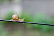 A Snail in the Rain, Snail in the garden on the wire