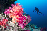 Coral reef and diver