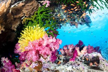 Exotic Coral Reef