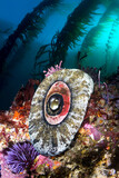 California reef sea life
