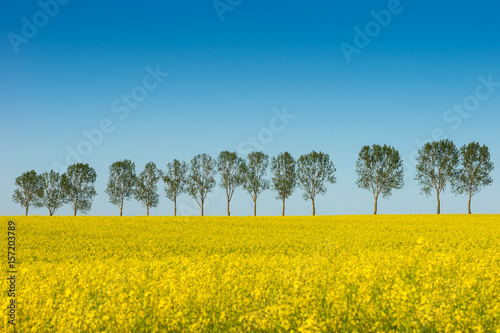 Fototapety, obrazy : Spring landscape, Rape field