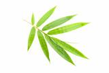 bamboo leaf on white background. © panya99