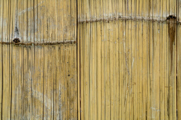 Bamboo bark texture © cjansuebsri