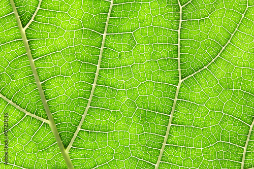 Close up the green leaf texture as green nature abstract background - 157231536