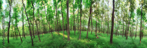 Poster 360 degree forest panorama
