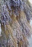 Lavendel, getrocknet