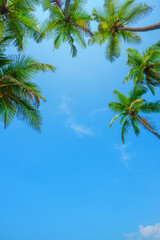 Coconut tropical palm trees vertical border with sky as copy space background