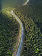 Road in the forest. Natural background from air