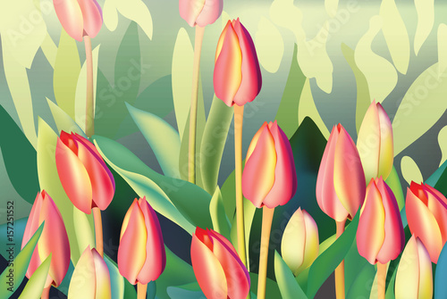Fototapeta Red tulip flowers Spring season invitation background. Vector illustration