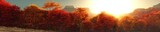 Panorama of autumn landscape, autumn trees at sunset