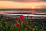 Seascape with poppies Magnificent sunrise view with beautiful poppies on the beach near Bourgas, Bulgaria