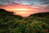 Seascape with peonies / Magnificent sunrise view with beautiful wild peonies on the beach near Kavarna, Bulgaria