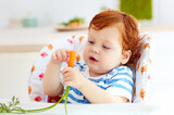Fototapeta happy infant baby eating fresh carrot while sitting in high chair on the kitchen