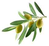 branch with olives isolated on a white background