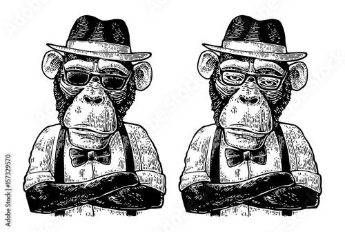 hipster-malpa-z-rekami-crossedin-w-kapelusz-koszula-okulary-i-muszka