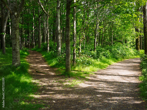 two road in forest,Northern Ireland