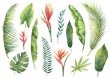 Watercolor set tropical leaves and branches isolated on white background. - 157355172