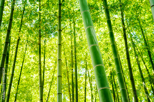 Aluminium Lime groen 竹林