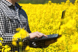 Male farmer - businessman holding a laptop on a field of yellow blooming canola, close-up. Agriculture the cultivation of crops.