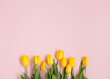 Row of yellow tulips on pink