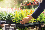 woman pick flower pot at garden plant nursery store