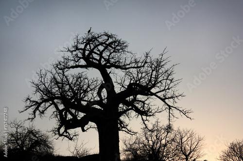 Fotobehang Baobab African landscape