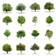 Quadro High definition collection Tree isolated on a white background
